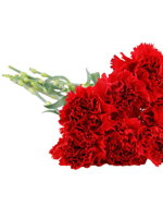 HF Dozen red Carnations
