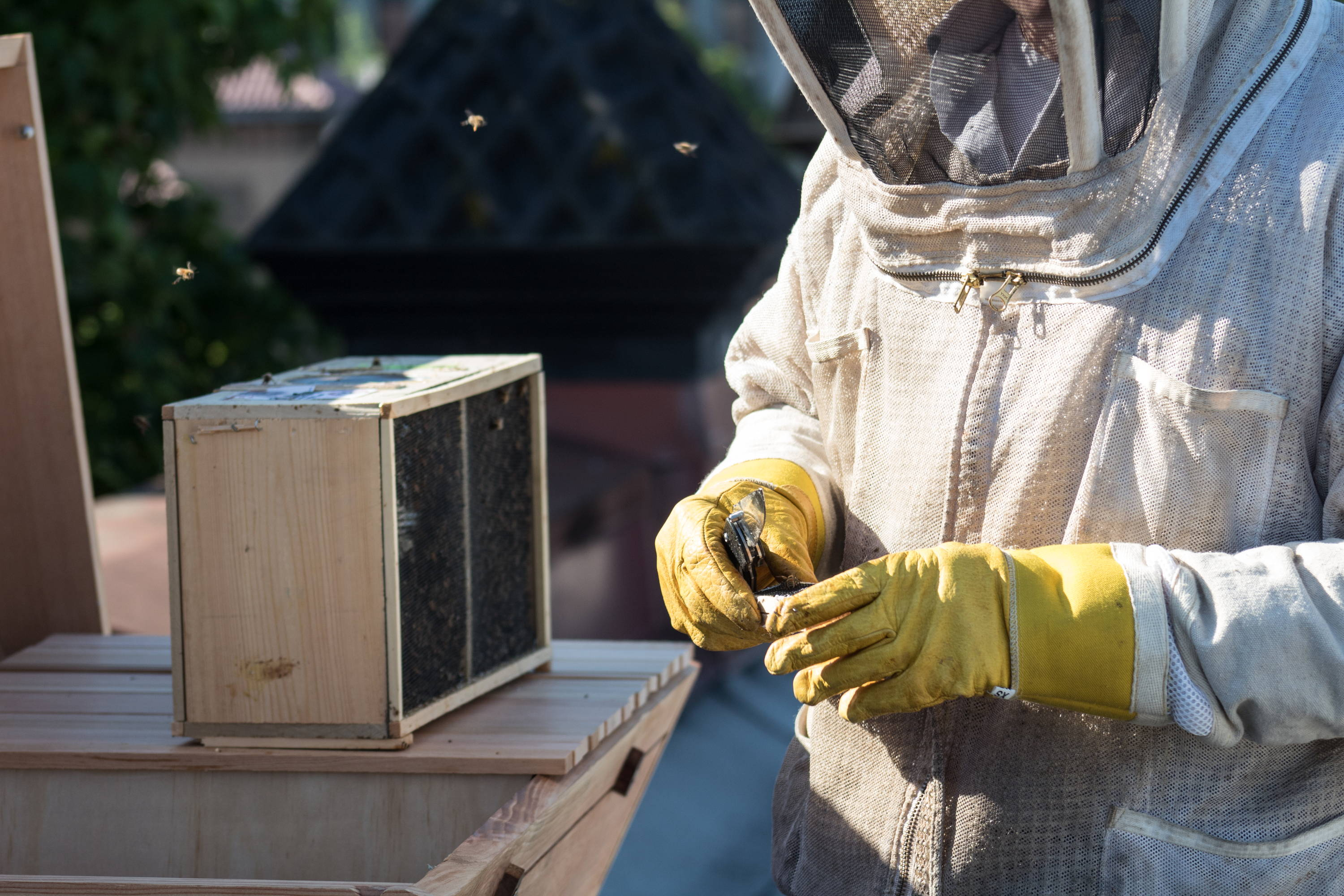 Beekeeping for beginners: where to start Basic tips 68