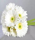 BF White Gerberas Bouquet