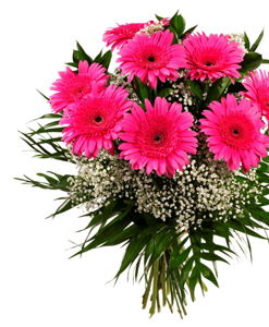 BF Hot Pink Gerbera Flowers
