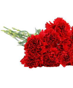BF Dozen red Carnation