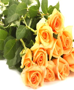 BF Dozen Yellow Roses