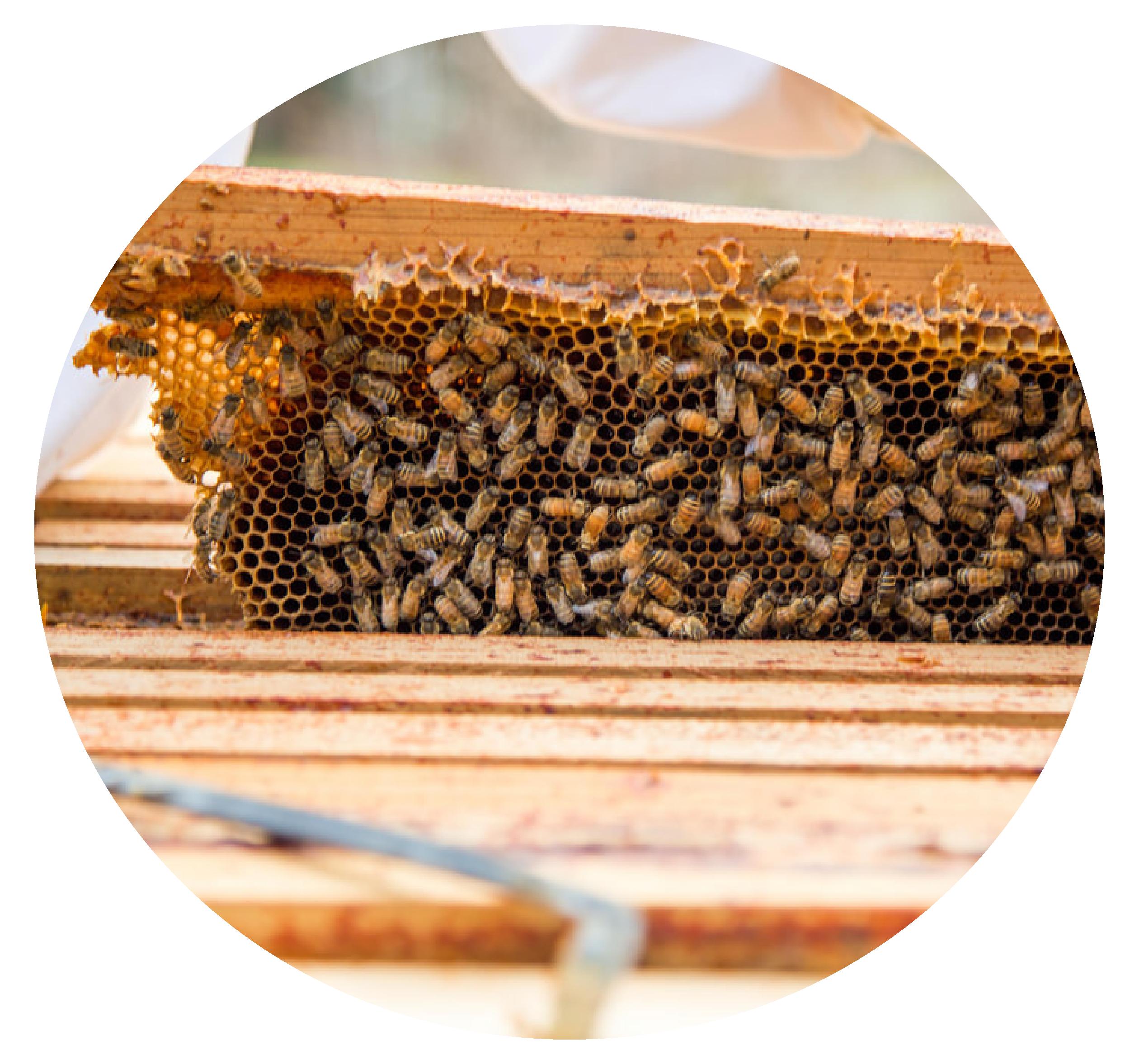 Bee Built