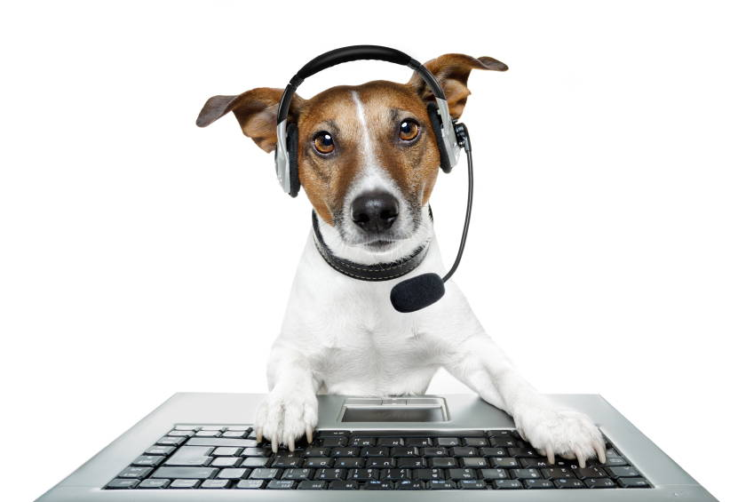 Pet Chef dog with headphones. Contact us.