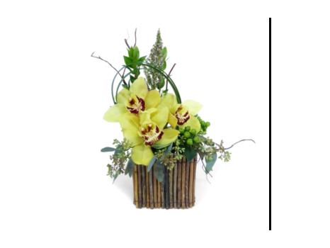 Phalaenopsis Orchid Planter