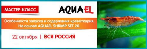 00e58971-a80e-49b6-8253-a53c500fa218