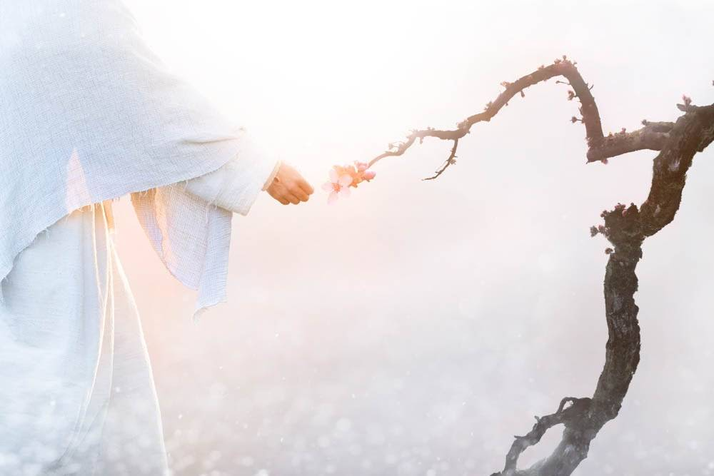 Image of Jesus touching the end of a dead branch, causing leaves to sprout.