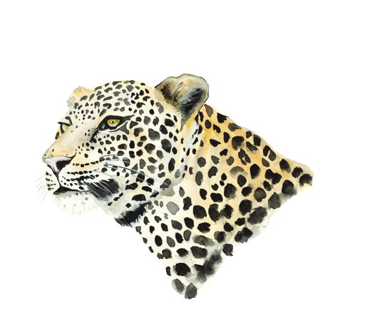 "Постер ""Пятнистый леопард"""
