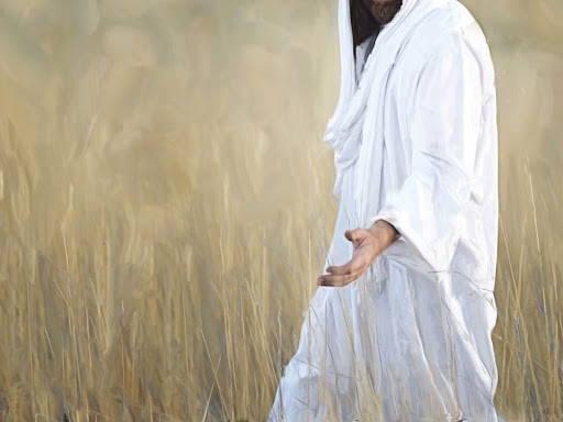 Jesus walking through a field of wheat.