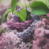 DPH Berries & Flowers