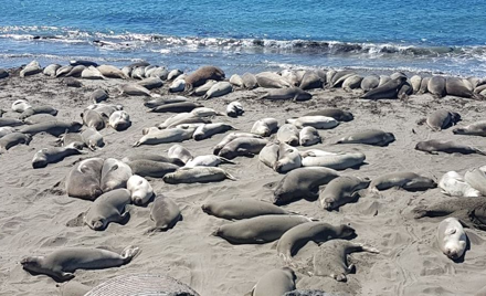 GPX Tour to the Elephant Seal Rookery