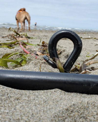 dog attached to the stake from saker at the beach