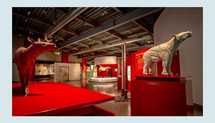 westfälisches pferdemuseum dauerausstellung