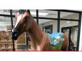 "A Gallopalooza Original - ""My Old Kentucky Horse"""