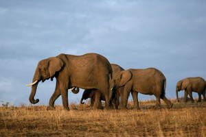 13 Days Best of Kenya Wildlife Safari Trail from Nairobi to Mombasa