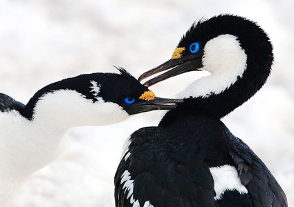 wildlife-of-antarctica