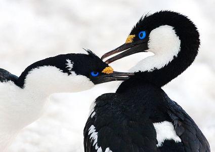wildlife-of-antarctica