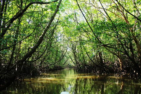 Mangrove Forest Fishing and Relaxing Adventure