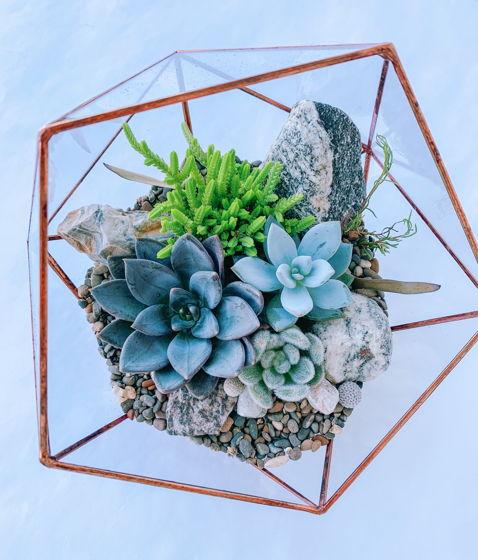 флорариум с суккулентами Скалистый
