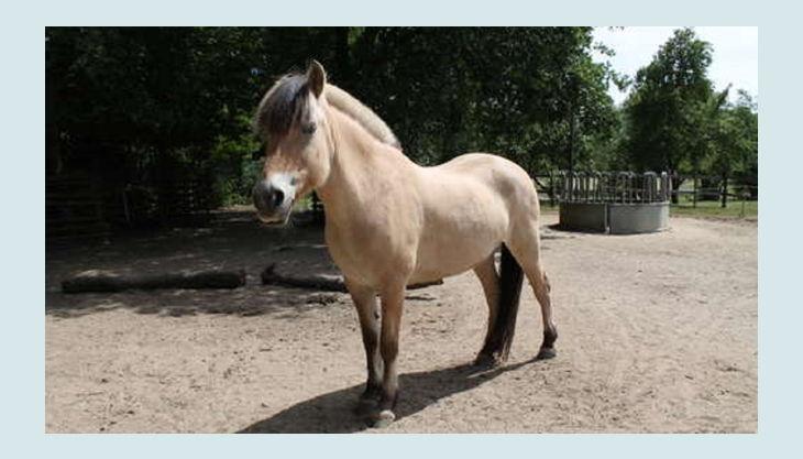 alte fasanerie berlin pferd