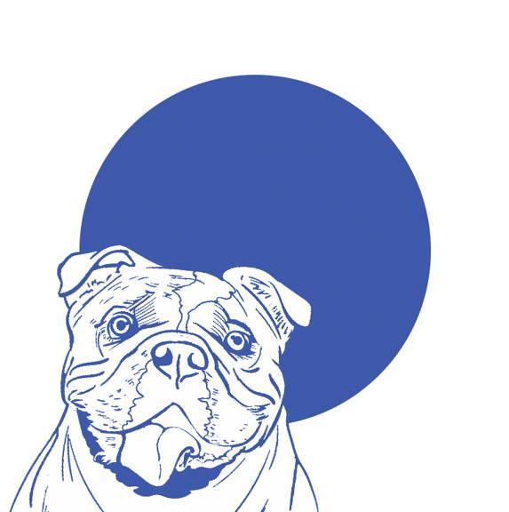Bulldog face drawing curafyt