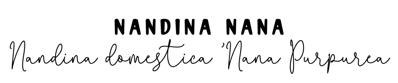 Nandina Nana: Nandina domestica 'Nana Purpurea