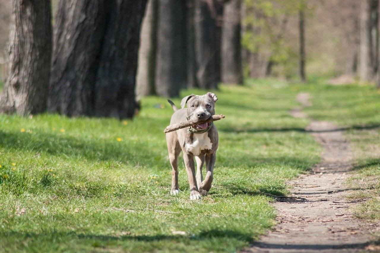 Spiele beim Spaziergang mit Hund
