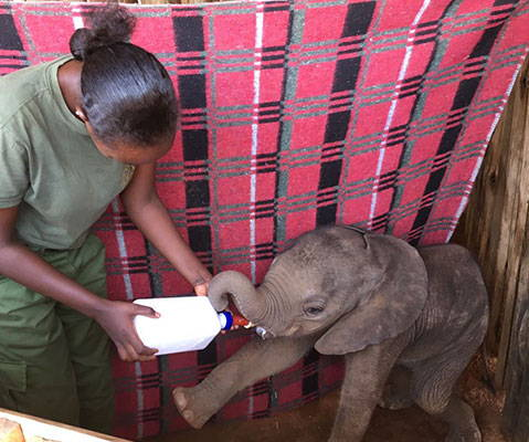 $10 provides a blanket to keep elephant calves warm on cold nights