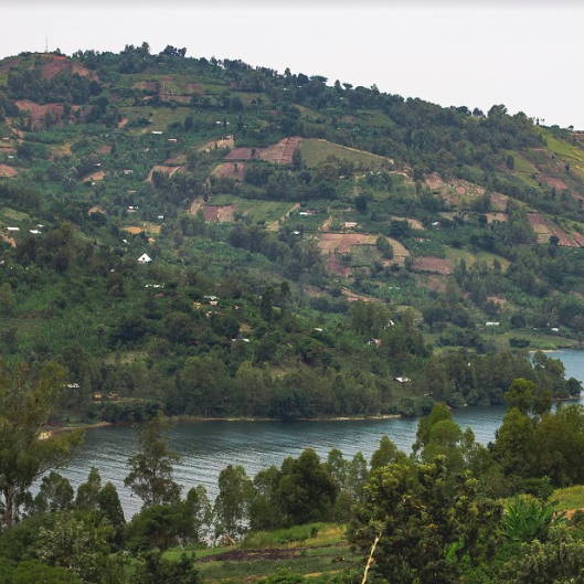 Congolese landscape with trees and river