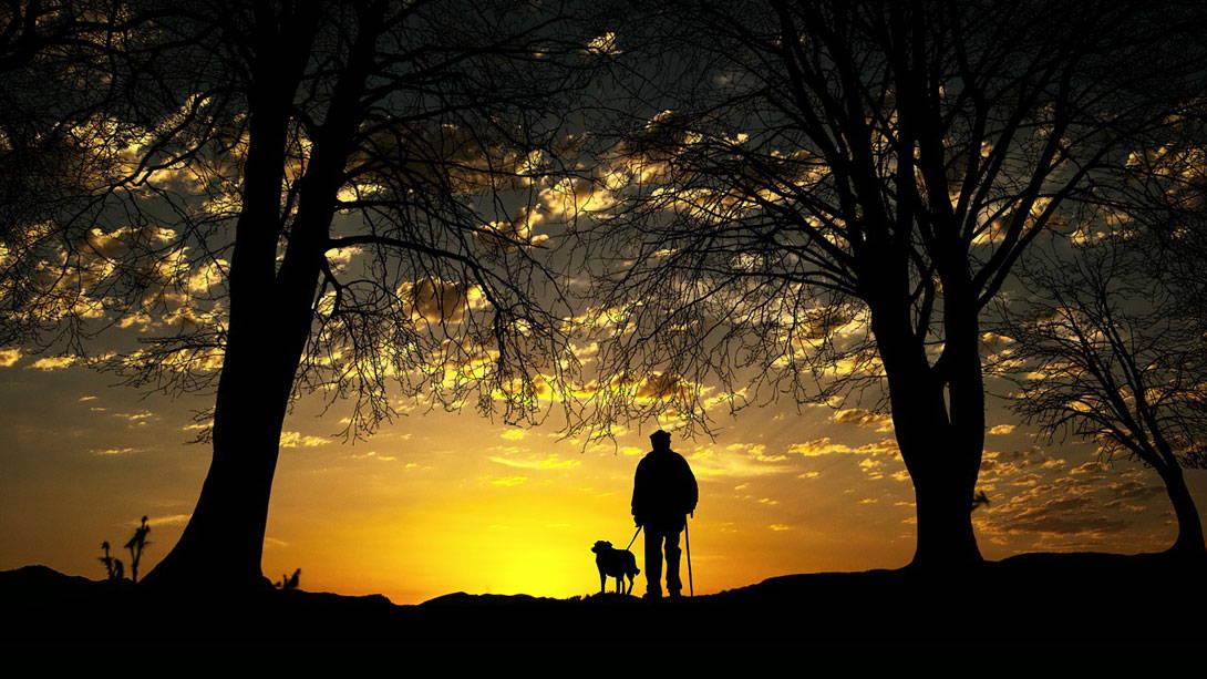 Nierenkrebs - Lebenserwartung bei Hunden