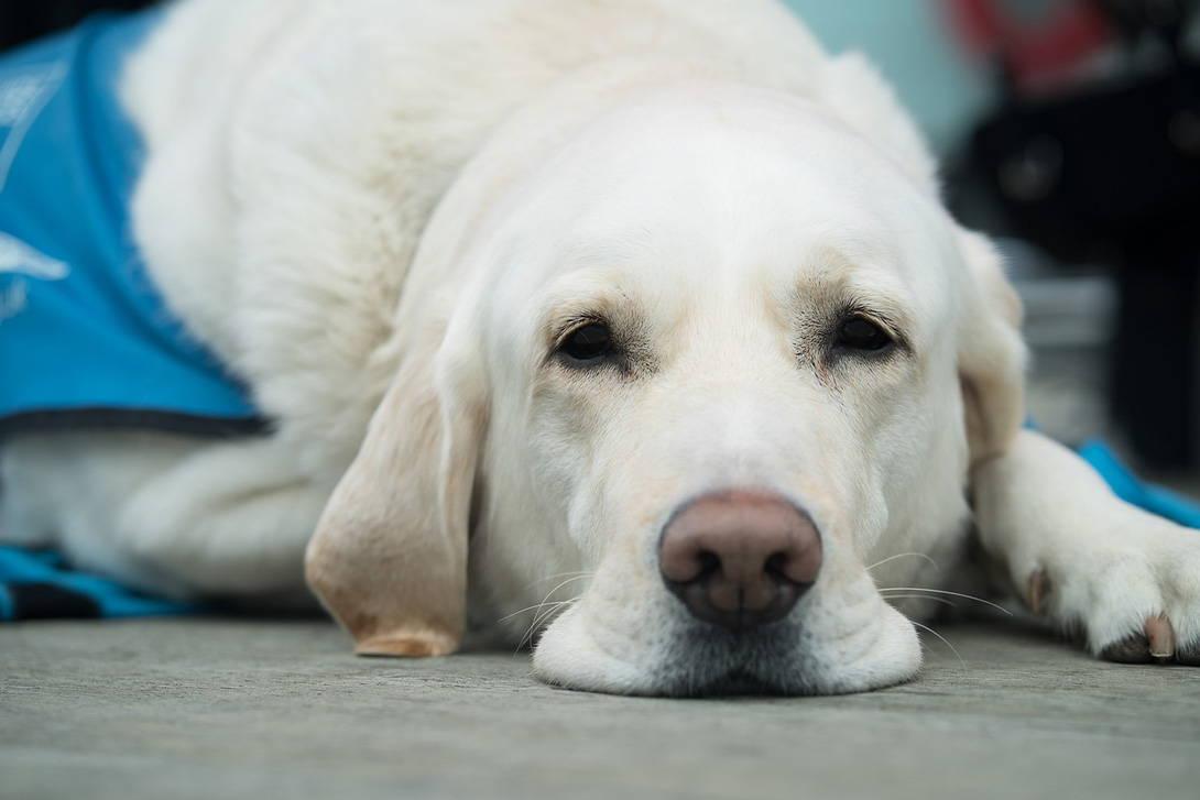 Vorbeugung, Erkennung und Behandlung von Herzwürmern beim Hund - Titelbild