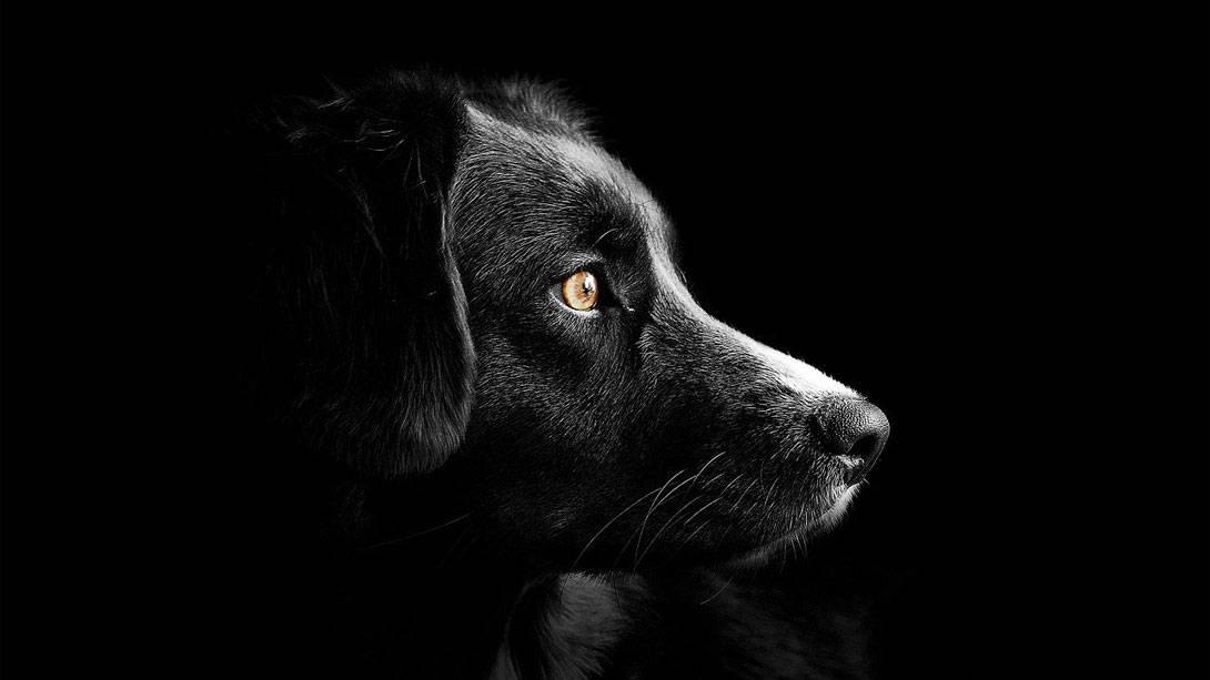Epilepsie beim Hund - epileptische Anfälle - Titelbild