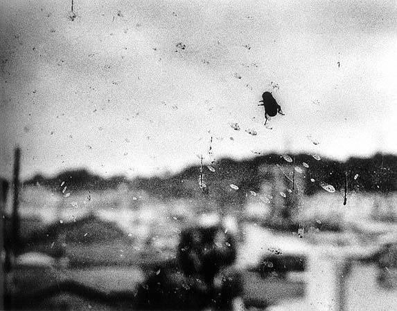 a fly on the window, by Daido Moriyama