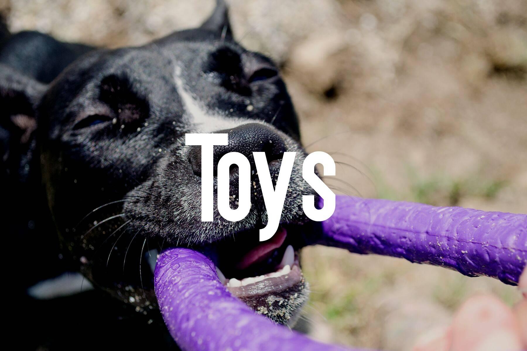 Dog Toys Cat Toys