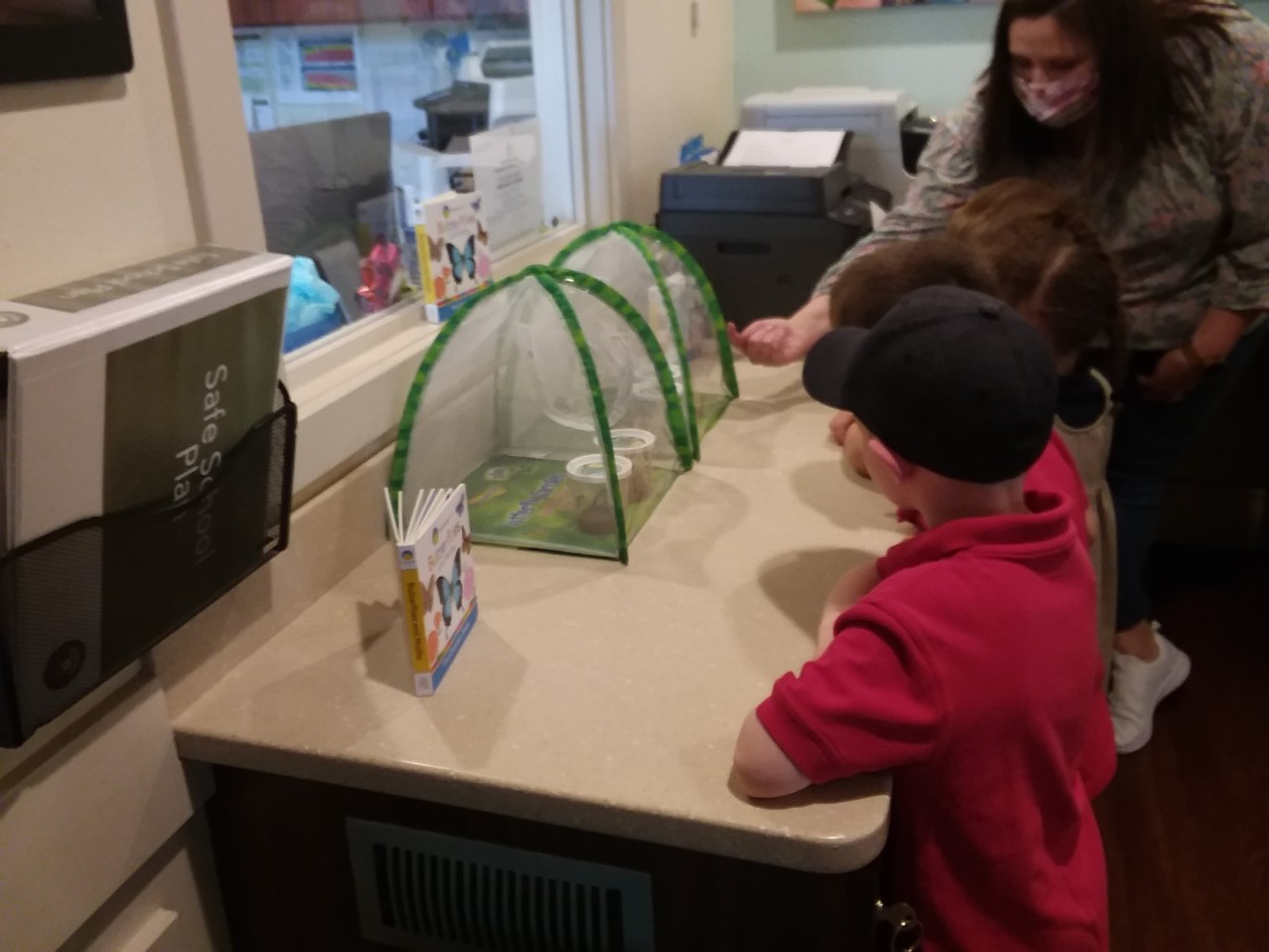 The children are having the opportunity to observe caterpillars turning into butterflies at the school.