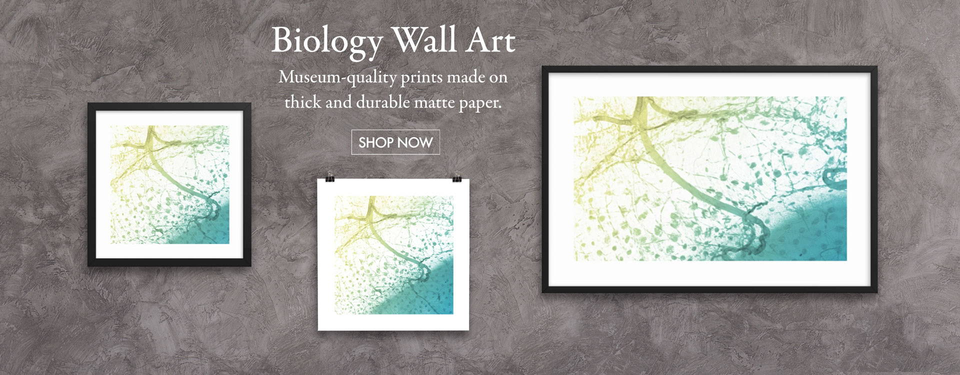 Biology Wall Art - Museum-quality prints made on thick and durable matte paper.