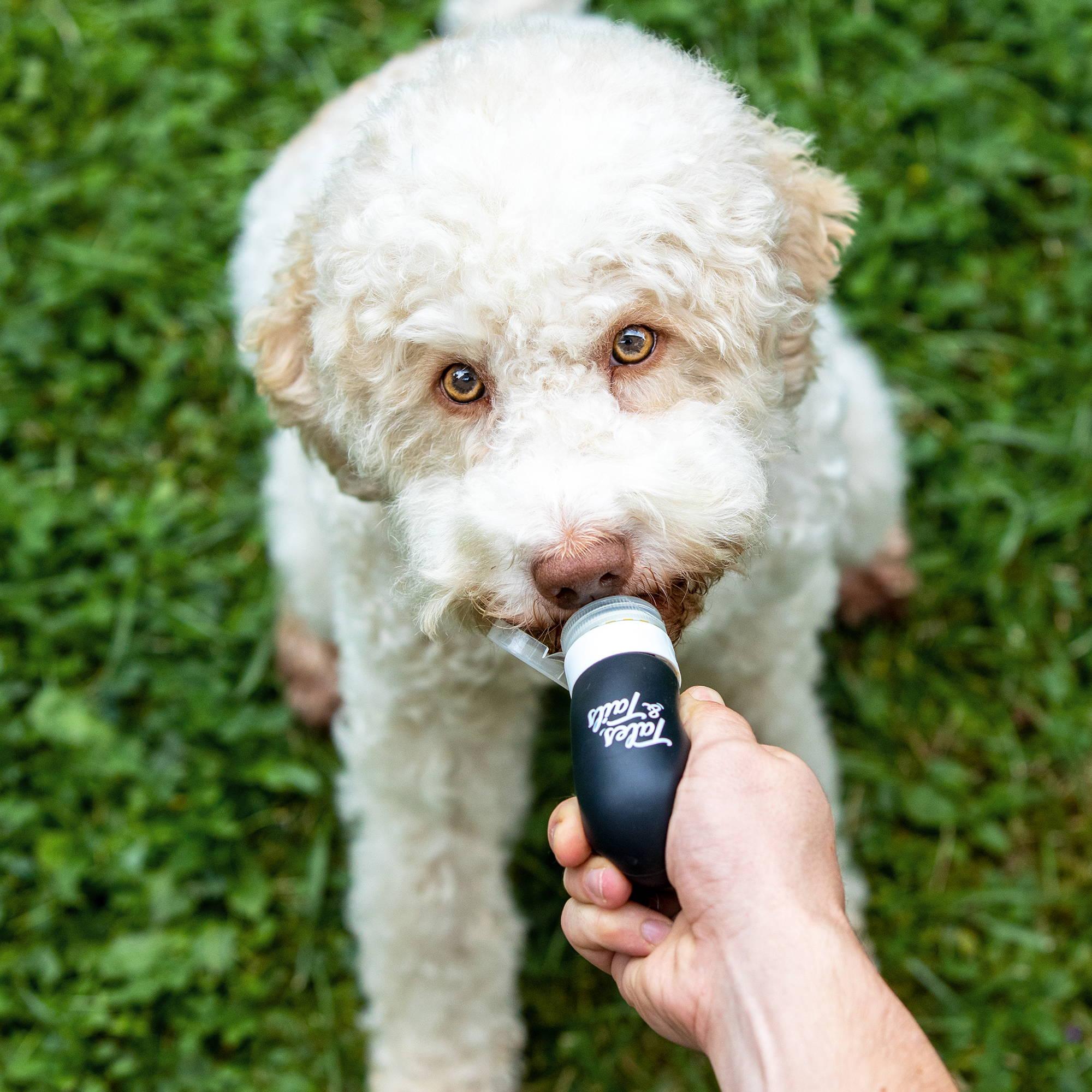 Futtertube für Hunde im Training