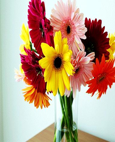 hf Spring Gerbera Bouquet