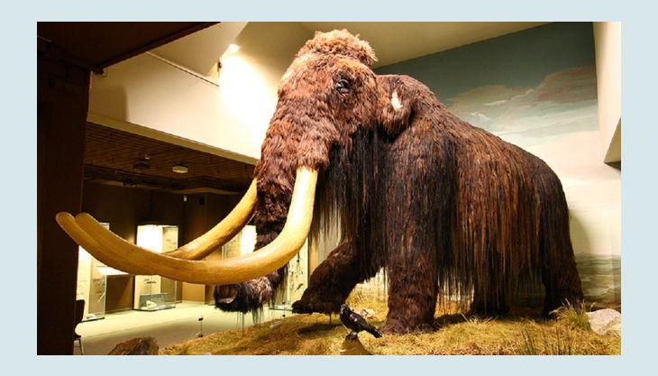 wasserschloss werdingen ein mammut