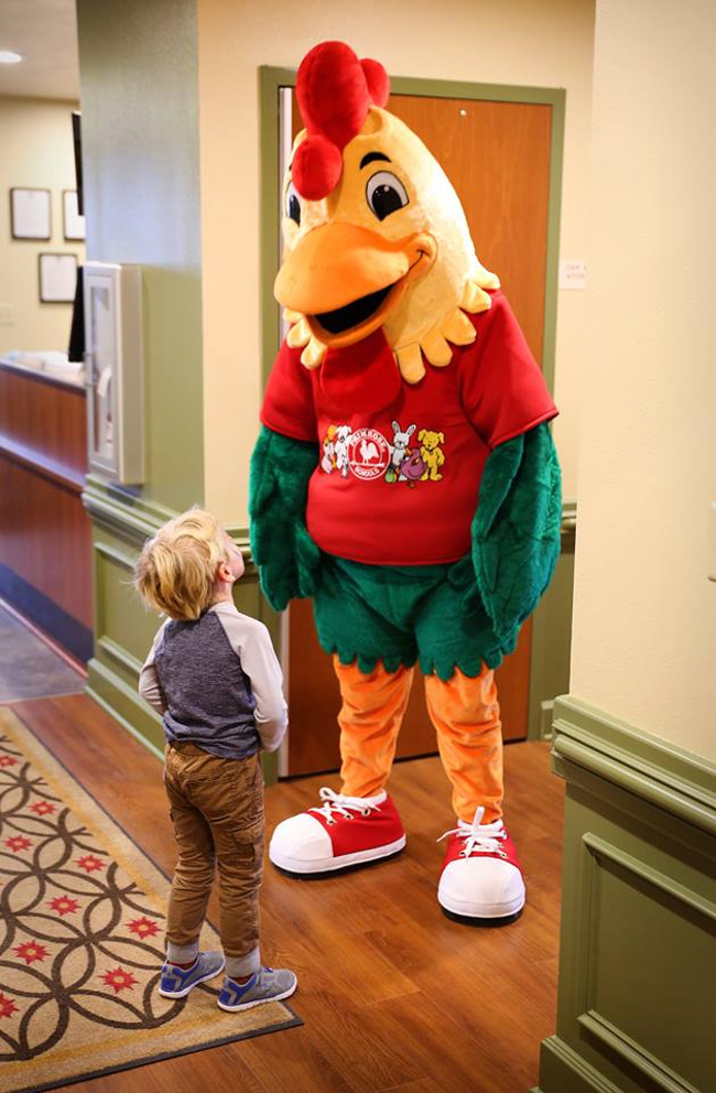 Young Primrose student looks up at Percy the chicken mascot in the school hallway