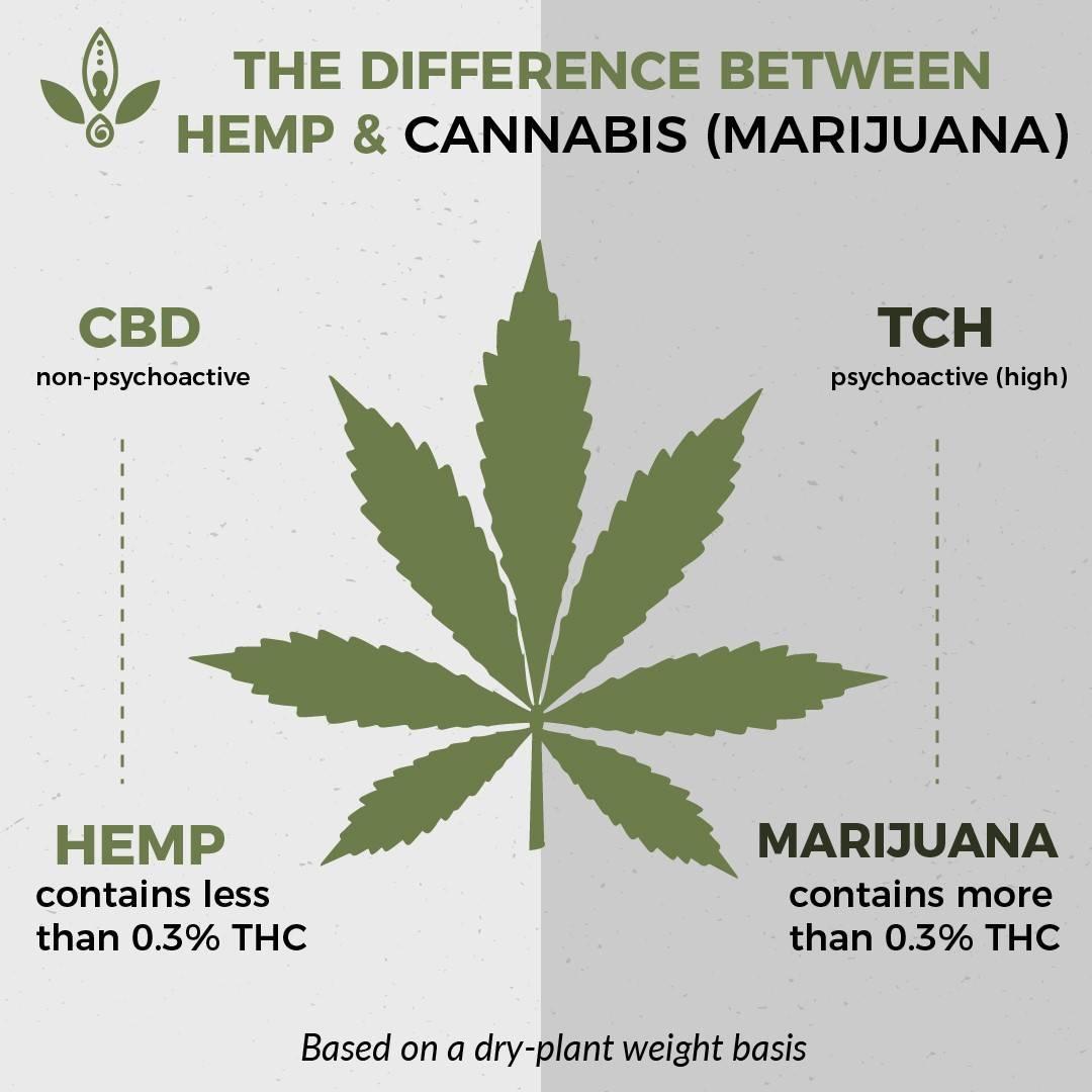 is hemp marijuana