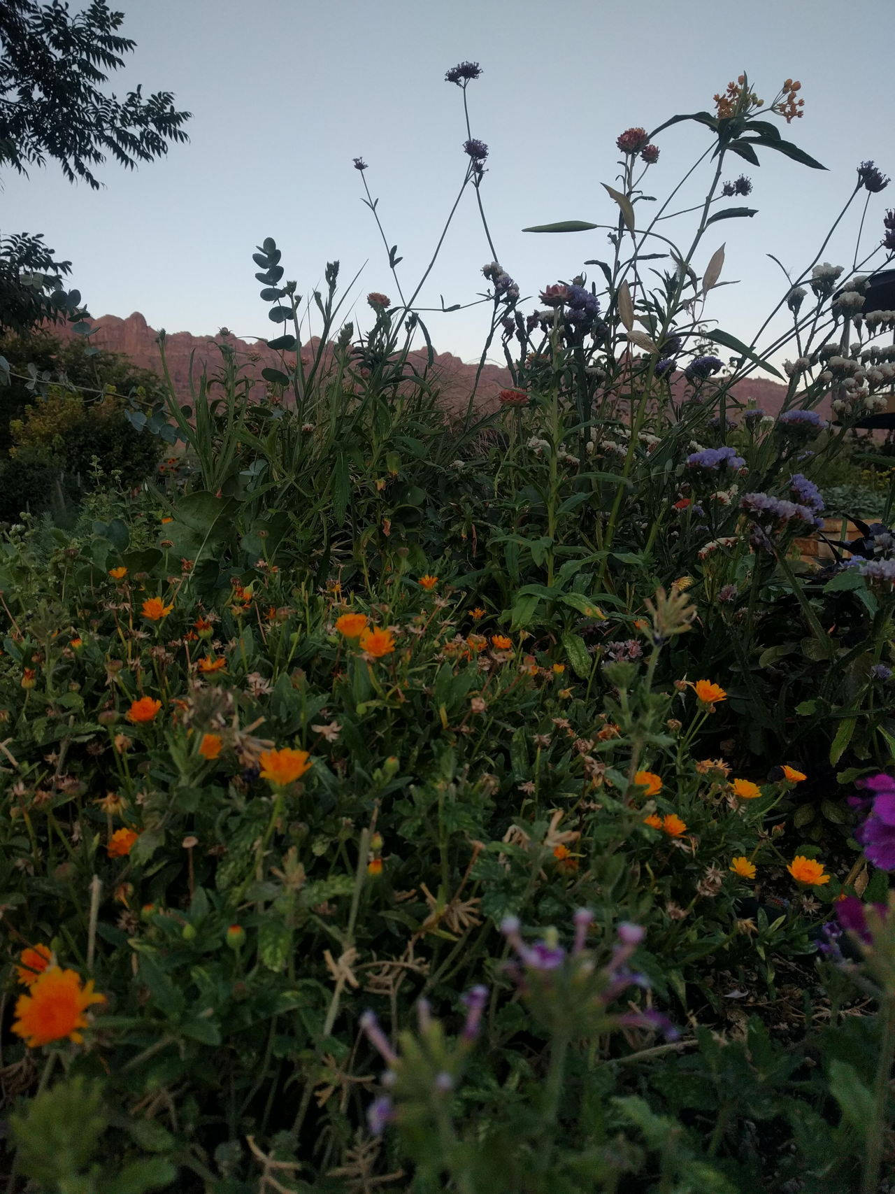A forest of flowers and herbs at Easy Bee Farm in Moab, Utah // read about what it's like to harvest at the farm on www.bridgidgallagher.com >>