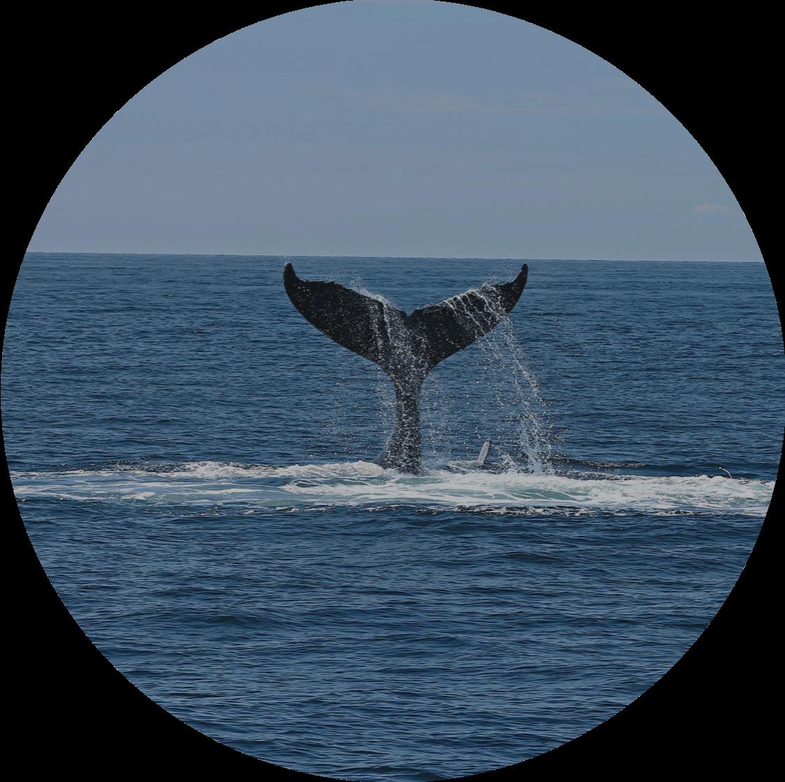 Schutz von Walen und Delphinen
