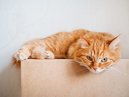 Mahón - Worried about how your pet will handle moving house? Try these tips to help them adjust.