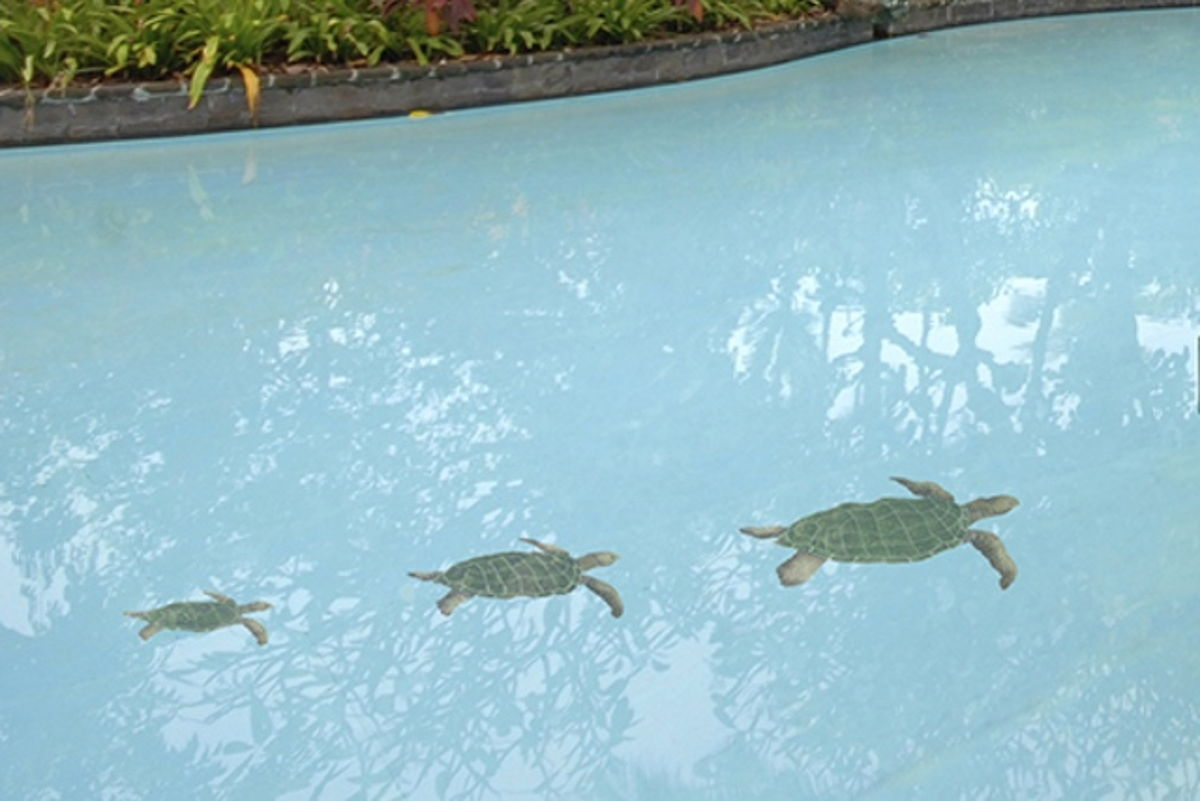 SEANATRL - Sea Turtle Natural Pool Mosaic