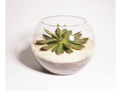 Terrarium - Glass bowl containing succulent plant