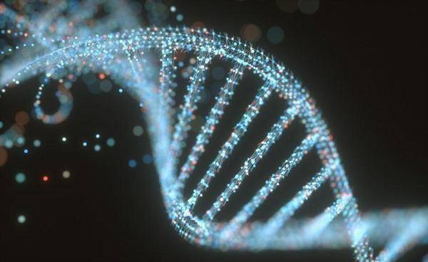 How Does the MTHFR Gene Affect Your Child's Health?
