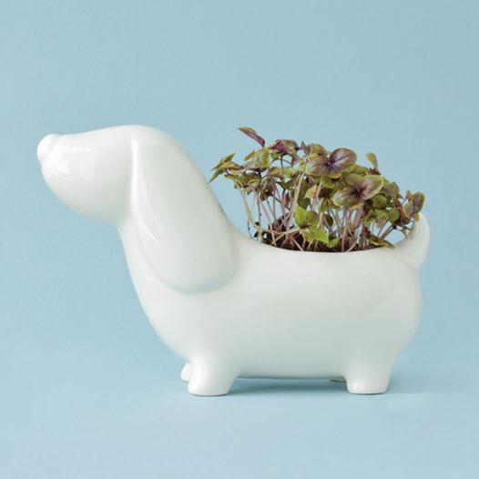 Набор для выращивания Собачка