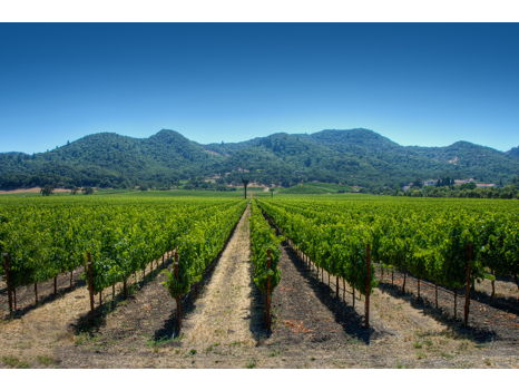 Wine Country Getaway for Four
