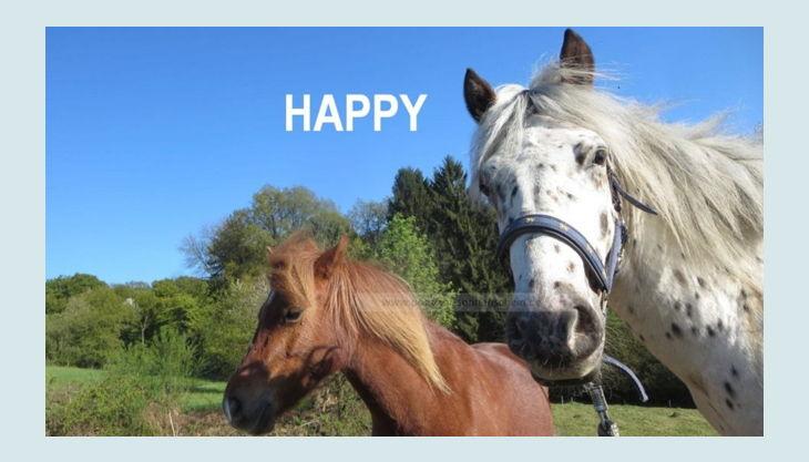 ponyhof sonnenschein ponys glücklich